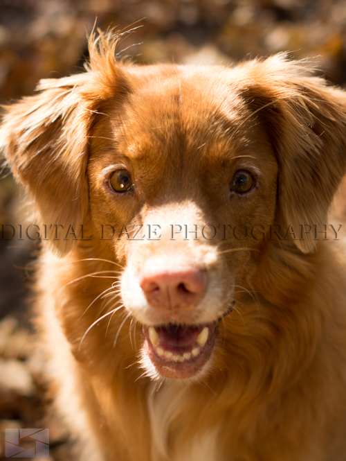 pet-photography-015