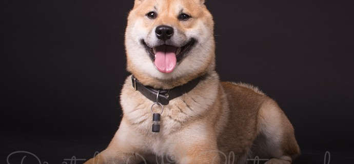 Dogs can smile!